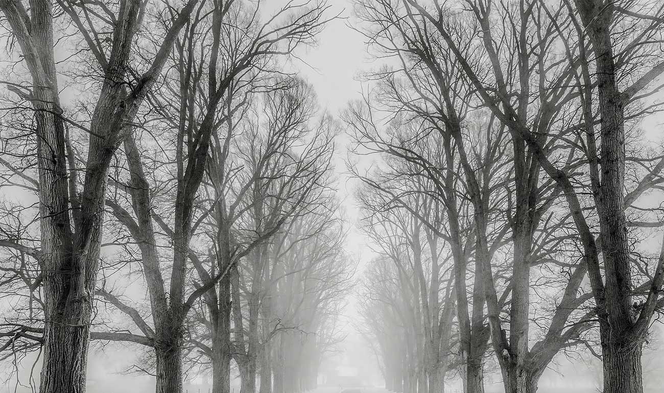Alberi spogli in mezzo alla nebbia bianca