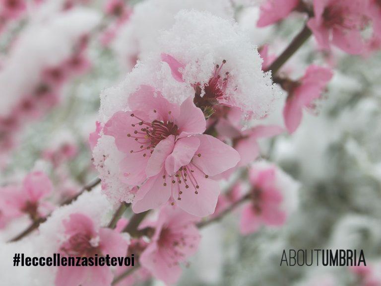 Un augurio floreale