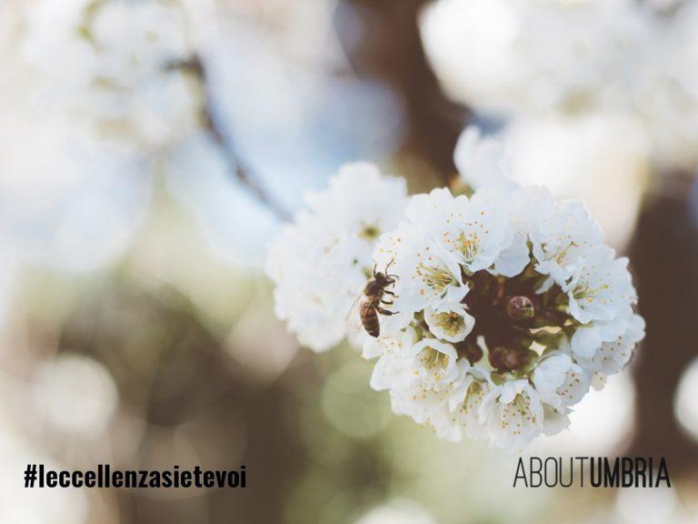 La letizia di un fiore
